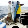 Dolphin/Mahi Mahi Possible World Record?