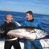 Video: Big Yellowfin Tuna and Sharks