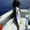 Hawaii State Record Yellowfin Tuna !?