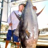 New Yellowfin Tuna World Record 427lbs Approved