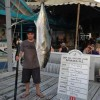 New WR Kingfish (Yellowtail)