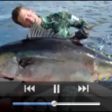 Yellowfin Tuna Spearfishing