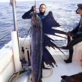 Diver Report:Punta Mita
